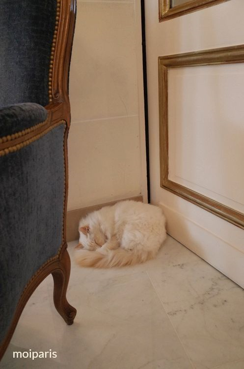 ブリストル パリのマスコット猫「ファ・ラオン」