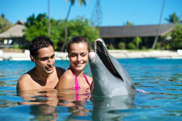 イルカとの触れ合いが楽しめるアクティビティ