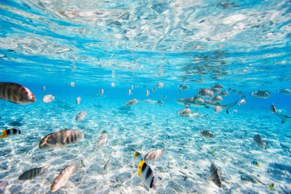 豊かなサンゴ礁の海が広がるボラボラ
