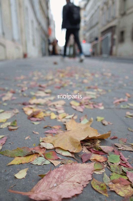枯れ葉舞うパリの散歩道