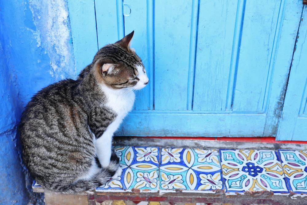 猫の街・シェフシャフエン