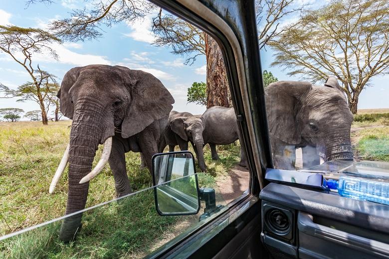 タンザニアでサファリを楽しみたい