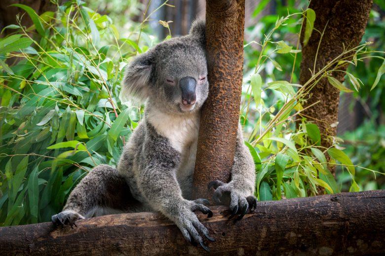 コアラ抱っこができる動物園あり