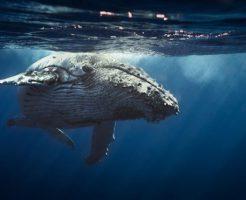 トンガでクジラと泳ぐ新婚旅行プラン