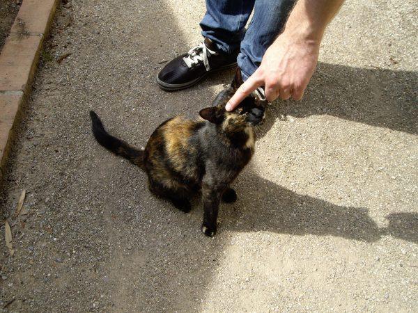 植物園の猫はフレンドリー