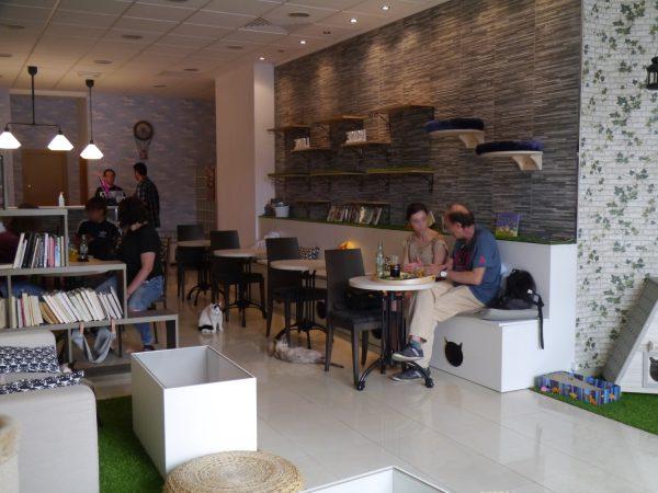 バレンシアの猫カフェ第1号店