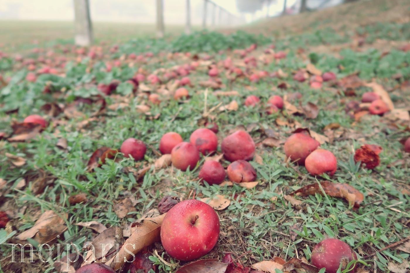 モンサンミッシェル旅行、ラ・ブイユ村、名産リンゴ。
