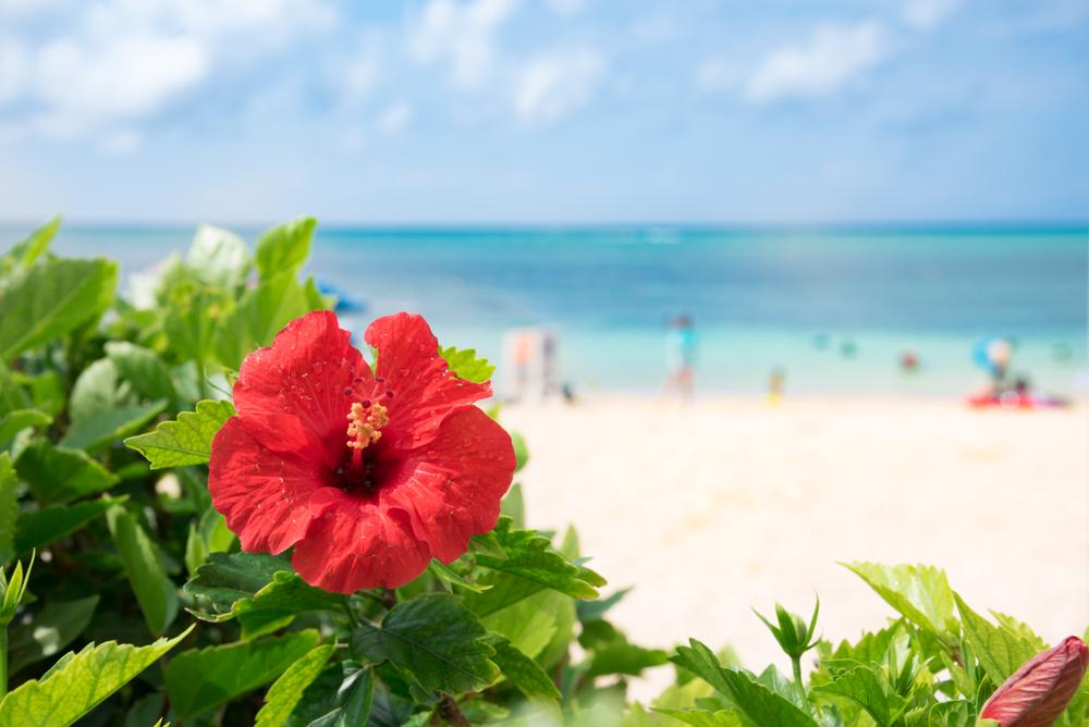 沖縄、ハネムーン、旅行、10月。