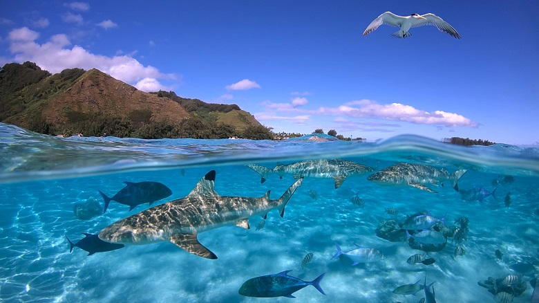 ランギロア島はダイビングのメッカ