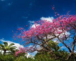 3月の沖縄新婚旅行お役立ち情報