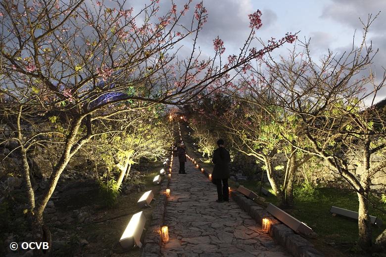 今帰仁城の桜ライトアップ