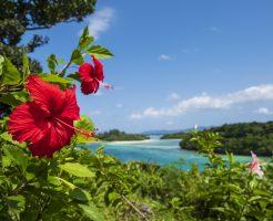 沖縄、南国の花