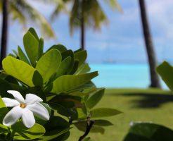 「幸せすぎる」ハネムーン!?タヒチに着いたら8枚の花びらのティアレを探そう!