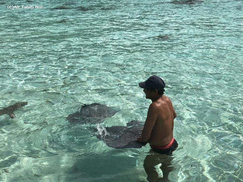 モツピクニックではエイやサメとのふれあいも