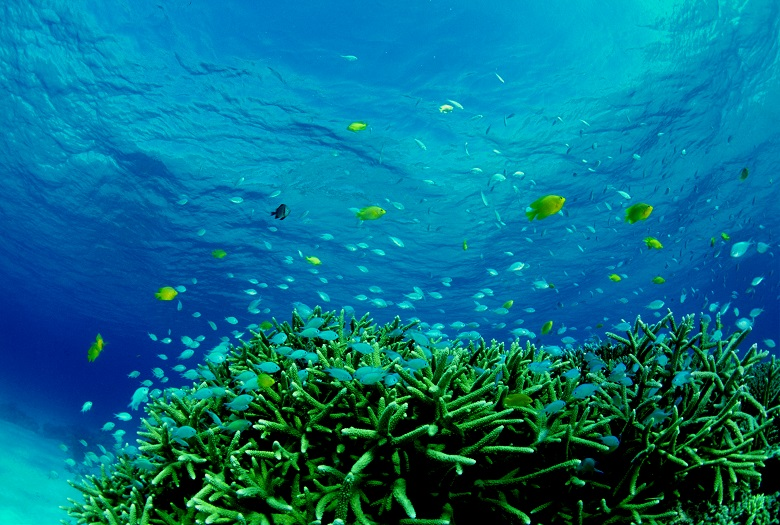 座間味諸島の美しい海